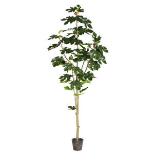 Green 6-Feet Potted Fig Tree with 71 Leaves