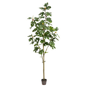 Green 7-Feet Potted Fig Tree with 86 Leaves