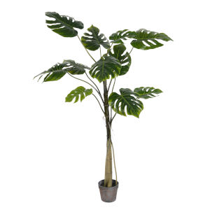 Green 54-Inch Potted Grand Split Philo Tree with 11 Leaves