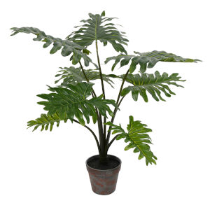 Green 25-Feet Potted Grand Philo Bush with 8 Leaves