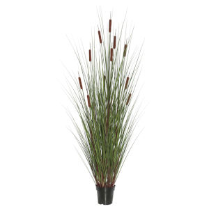 Multicolor 36-Inch Grass with Six Cattails Potted