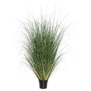 Green 48-Inch Curled Grass in Pot