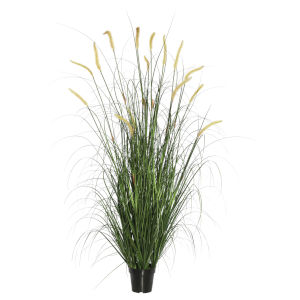 Multicolor 60-Inch Foxtail Grass in Pot