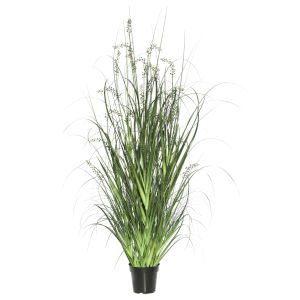 Green Sheeps Grass in Pot