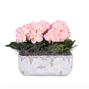 Pink Begonia in Cement Rectangle