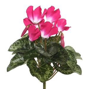 Beauty Cyclamen Bush