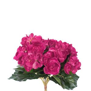 Hot Pink Begonia Bush