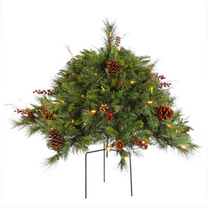 Green Cibola Mix Berry Bush 2-foot x 36-inch
