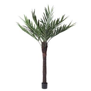 72 In. Kentia Palm