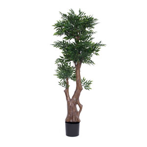 60 In. UV Ruscus Tree