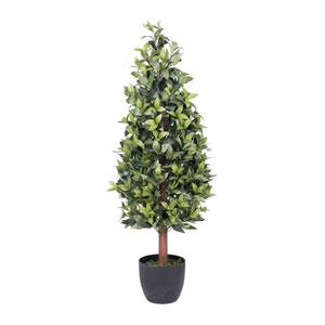 4 Ft. Bay Tree in Pot