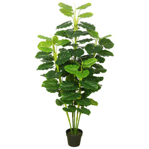 Fresh Philodendron with Pot