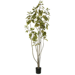 5 Ft. Cotinus Coggygria Tree with Pot