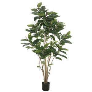 5 Ft. Potted Rubber Tree