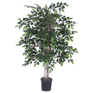 4 Ft. Mini Ficus Bush