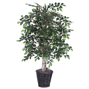 Mini 4 Ft. Ficus Bush