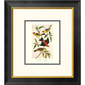 Louisiana Tanager, Scarlet Tanager By John James Audubon, 20 X 18-Inch Wall Art With Decorative Border