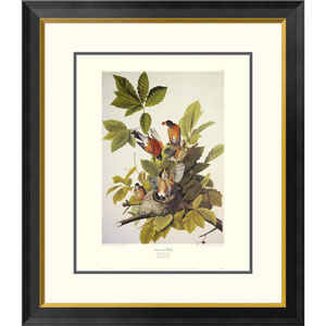 American Robin By John James Audubon, 30 X 26-Inch Wall Art With Decorative Border