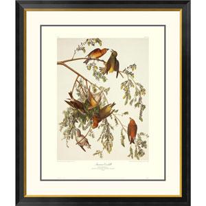 American Crossbill By John James Audubon, 40 X 34-Inch Wall Art With Decorative Border
