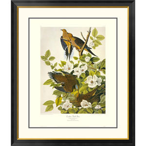 Carolina Pigeon Or Turtle Dove By John James Audubon, 40 X 34-Inch Wall Art With Decorative Border