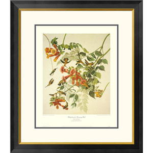 Ruby Throated Hummingbird By John James Audubon, 30 X 26-Inch Wall Art With Decorative Border