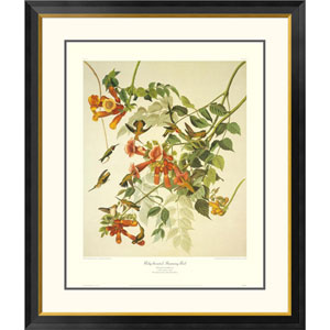 Ruby Throated Hummingbird By John James Audubon, 40 X 34-Inch Wall Art With Decorative Border