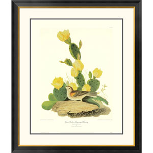 Grass Finch Or Bay Winged Bunting By John James Audubon, 40 X 34-Inch Wall Art With Decorative Border