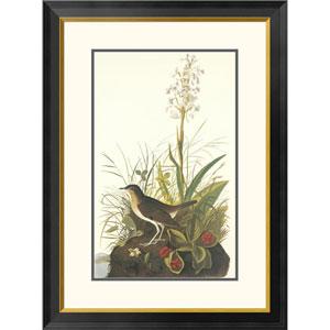 Tawny Thrush By John James Audubon, 32 X 23-Inch Wall Art