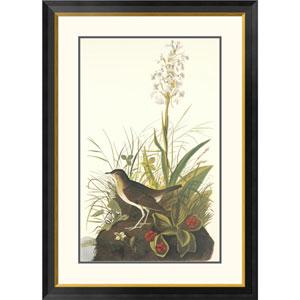 Tawny Thrush By John James Audubon, 40 X 28-Inch Wall Art