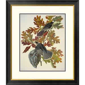 Canada Jay By John James Audubon, 30 X 26-Inch Wall Art