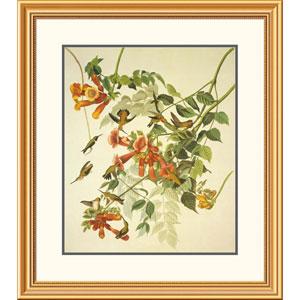Ruby Throated Hummingbird By John James Audubon, 32 X 28-Inch Wall Art