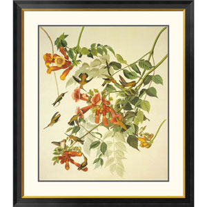 Ruby Throated Hummingbird By John James Audubon, 40 X 34-Inch Wall Art