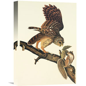Barred Owl By John James Audubon, 11 X 16-Inch Wall Art