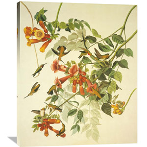 Ruby Throated Hummingbird By John James Audubon, 33 X 40-Inch Wall Art