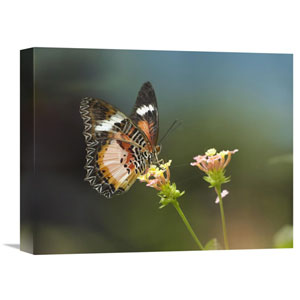 Nymphalid Butterfly Feeding On Flower Nectar, Native To Asia By Tim Fitzharris, 12 X 16-Inch Wall Art