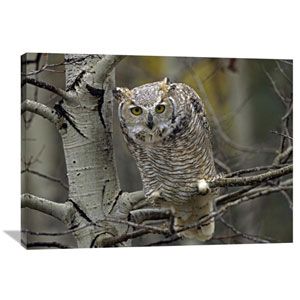 Great Horned Owl Pale Form, Kootenays, British Columbia, Canada By Tim Fitzharris, 30 X 40-Inch Wall Art