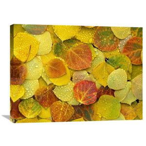 Fallen Autumn Colored Aspen Leaves On The Ground Covered In Dew Droplets, Colorado By Tim Fitzharris, 24 X 32-Inch Wall Art