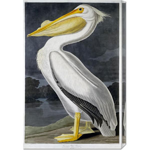 American White Pelican by John James Audobon: 19.7 x 30 Canvas Giclees, Wall Art