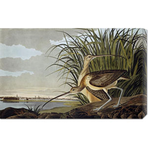 Male and Female Long Billed Curlew by John James Audubon: 30 x 19.08 Canvas Giclees, Wall Art
