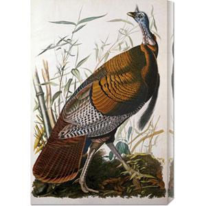 Wild Turkey, Male by John James Audubon: 20.1 x 30 Canvas Giclees, Wall Art
