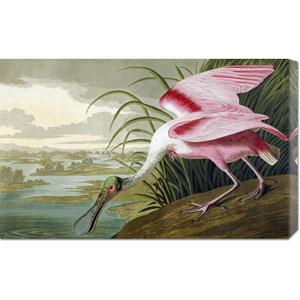 Roseate Spoonbill by John James Audubon: 30 x 18.66 Canvas Giclees, Wall Art