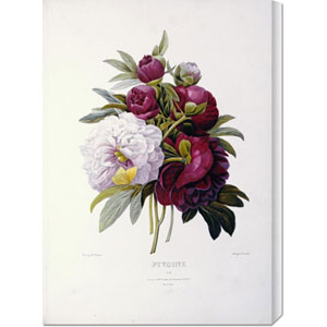 Peonies by Pierre Joseph Redoute: 21.2 x 30 Canvas Giclees, Wall Art