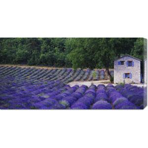 Fields of Lavender by Rustic Farmhouse by Owen Franken: 36 x 18 Canvas Giclees, Wall Art