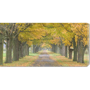 Country Road Lined by Trees in Autumn by Owaki-Kulla: 36 x 18 Canvas Giclees, Wall Art