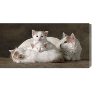 Van Colored White and Red Turkish Angora Cats by Yann Arthus-Bertrand: 36 x 18 Canvas Giclees, Wall Art