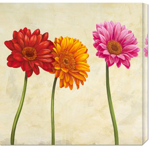 Gerberas by Cynthia Ann: 24 x 24 Canvas Giclees, Wall Art