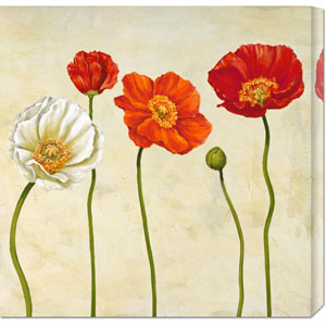 Coquelicots by Cynthia Ann: 24 x 24 Canvas Giclees, Wall Art
