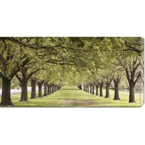 Rows of Trees Bordering Greensward: 36 x 18 Canvas Giclees, Wall Art