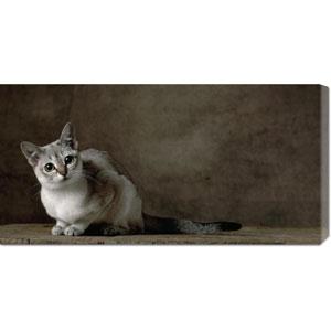 Brown Tabby Singapura Cat by Yann Arthus-Bertrand: 36 x 18 Canvas Giclees, Wall Art