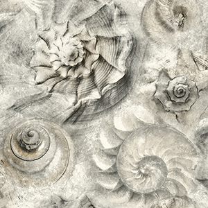 Opulent Shell Gray Wallpaper